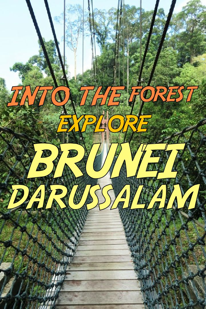 Discover the green kingdom in Borneo Island. Get close to tropical rain forest and nature in Brunei Darussalam.