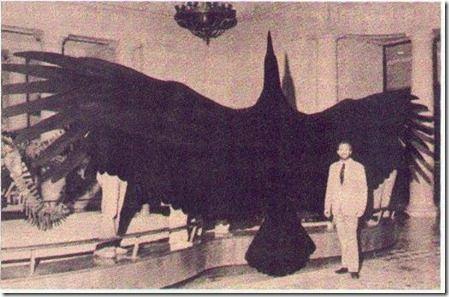"""Nos últimos anos têm surgido alguns novos testemunhos de pessoas que viram o mítico """"Pássaro Trovão"""", nos EUA, mais especificamente no Alaska . Na verdade este """"mito"""" é dos mais fascinantes da atualidade, ainda mais do que o Bigfoot ou do Yéti. Embora o primeiro relato, de 1890, descreva uma espécie de pterodáctilo, com asas sem penas e uma cabeça semelhante à de um crocodilo, fazendo acreditar numa sobrevivência deste dinossauro do Jurássico até pelo menos os finais do século XIX,"""