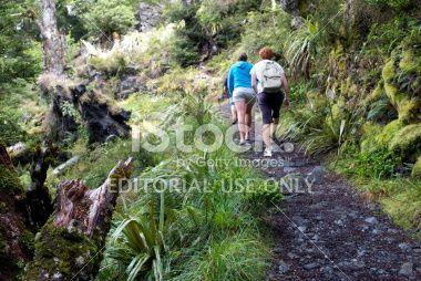 Trampers, Kahurangi National Park, New Zealand Royalty Free Stock Photo