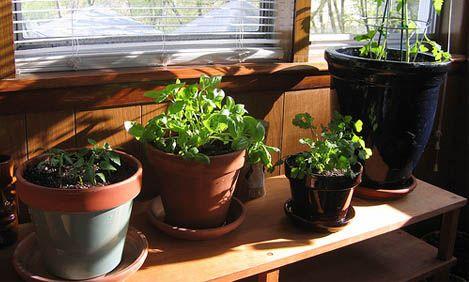Flow Magazine - Χρήσιμες συμβουλές για το σπίτι και τα φυτά σας