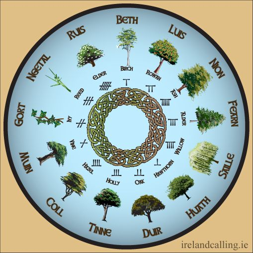 The Celtic Tree Calendar is based on the Ogham alphabet and its association with trees. It consists of 13 months, each 28 days long, following the lunar cycle, as Roman accounts have suggested the Druids did, with one extra day representing the 23rd December, the 'Day of Creation'. Each of the 13 months is represented by a tree together with its Ogham letter.