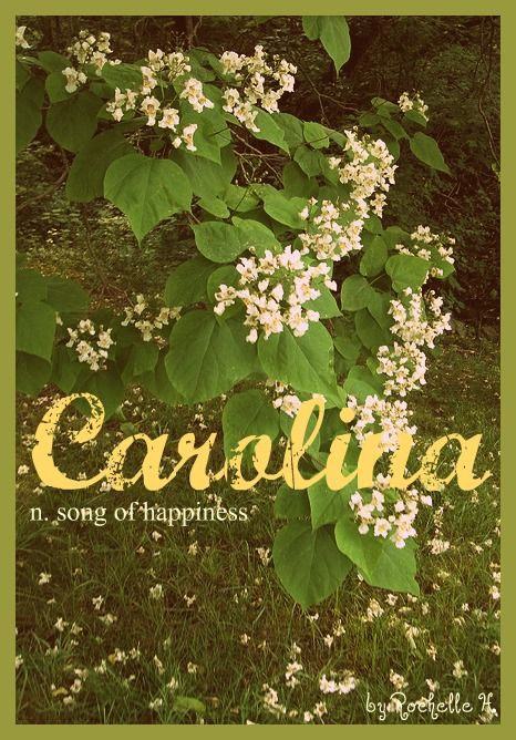 Baby Girl Name: Carolina. Meaning: Song of Happiness. Origin: Latin; French; Italian; English. http://www.pinterest.com/vintagedaydream/baby-names/