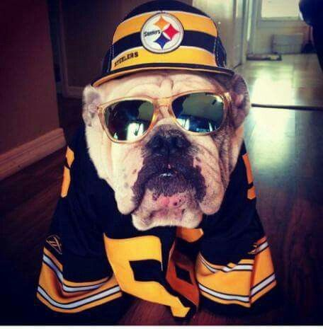 55b8e489732 pittsburgh steelers jersey for dog