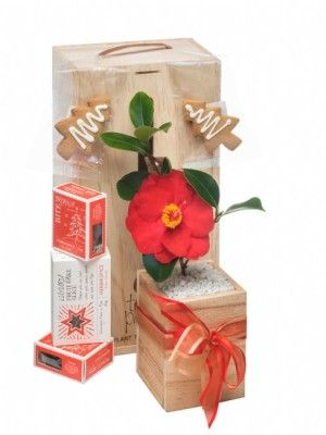 Gift box includes gorgeous little Christmasy treats; Luxury Fruit cake slice, Gingerbread Xmas trees and Brownie bites.range. Beautifully boxed in a purpose designed gift box, made from sustainable NZ pine. Boxes can be reused or recycled.