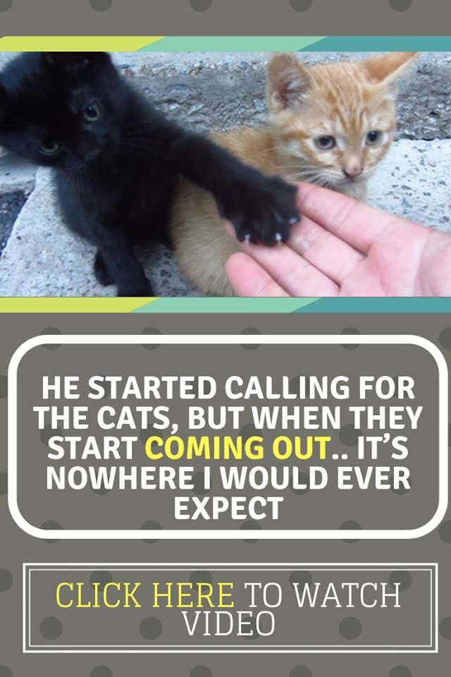 He Started Calling For The Cats But When They Start Coming Out It S Nowhere I Would Ever Expect Cats Cat Rescue Stories Animal Rescue Stories