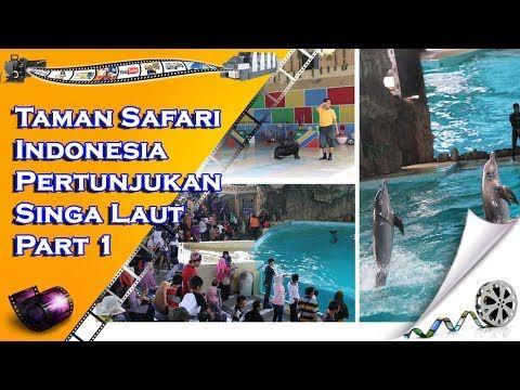 Taman Safari Indonesia Pertunjukan Singa Laut - Part 1