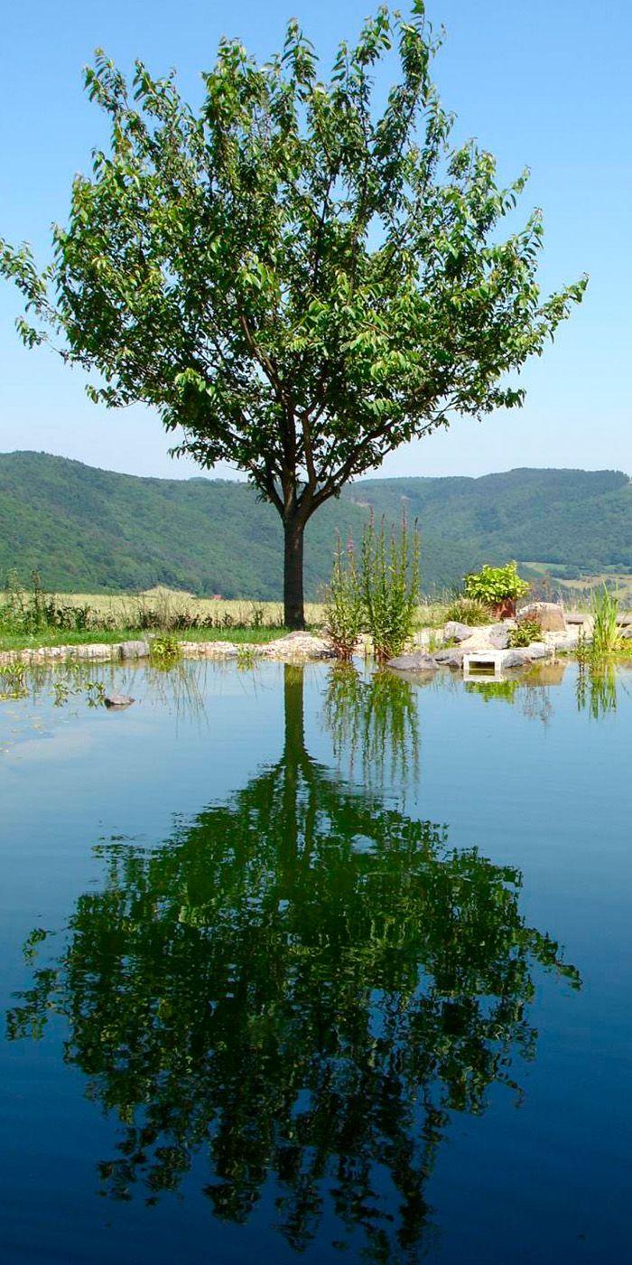 Popular Prachtvoller Garten auf dem Land mit gro em Schwimmteich am Hang