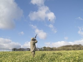 Game shooting, game cookery and luxury accommodation at Hendra Barns, Cornwall.