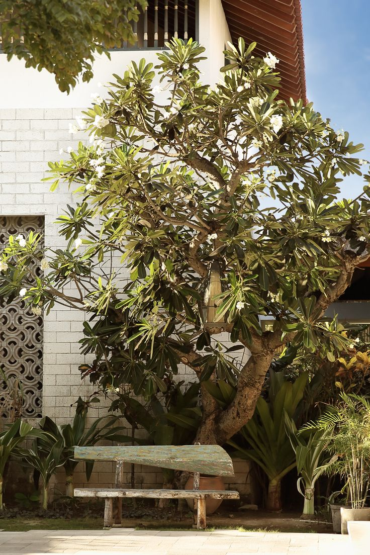 Public area - frangipani bench at garden