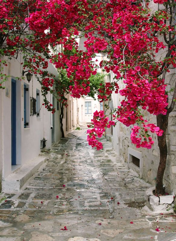 Tuinposter: Griekse straat met rose / rood bloeiende klimplant - Teun's Tuinposters