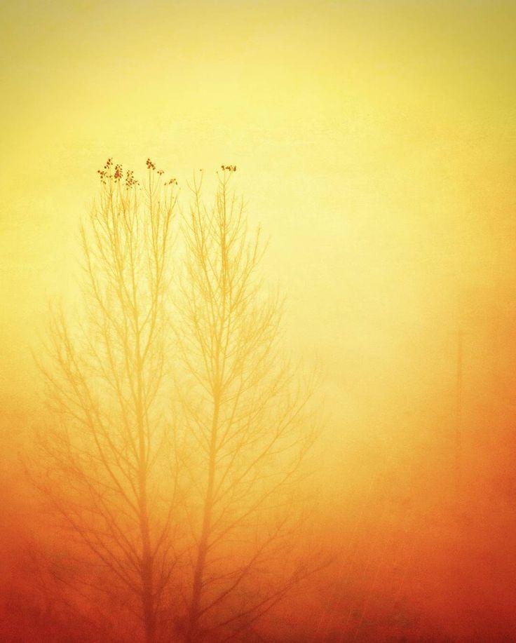 I tak sobie czekaliśmy na to wschodzące słońce. One na drzewie ja na górce. Po pół godzinie musiałem wracać do miasta i codzienności. One być może w końcu doczekały.  #autumn #sunrise #foggy #jesień #november #kujawskopomorskie #poland #polska #widok #krajobraz #landscape #memories #love  #instagood  #follow  #photooftheday #followme  #picoftheday #instadaily  #instalike  #instagood #wirtualneszlaki