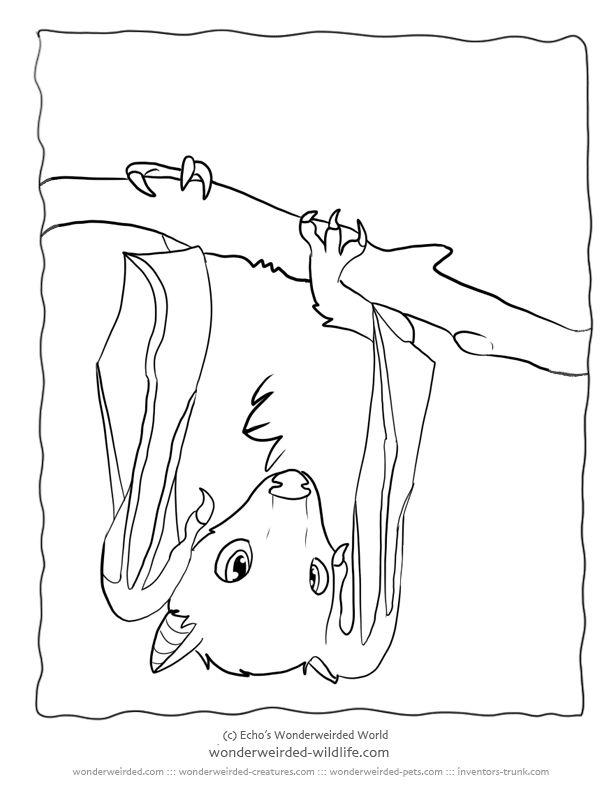 bat coloring page - Bing images