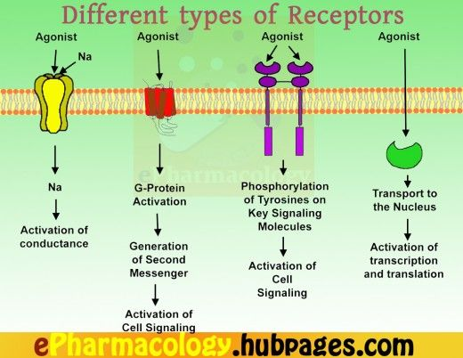 The different types of receptors