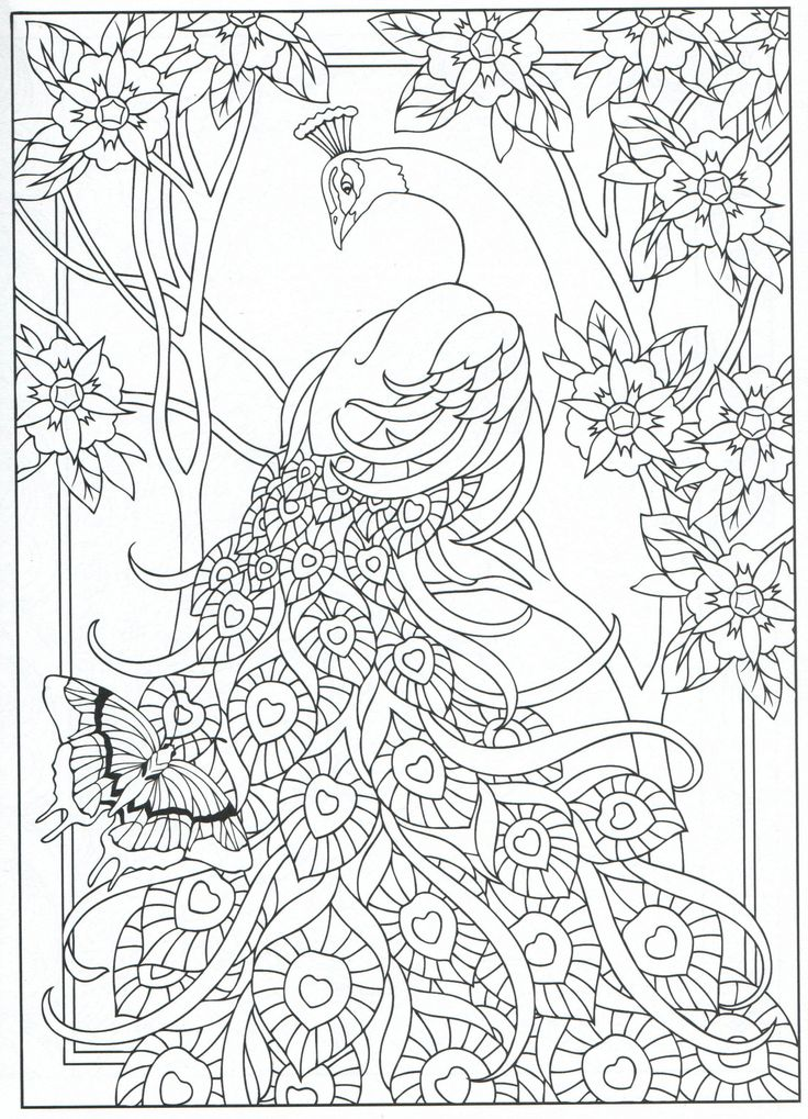 peacock coloring page for adults 731