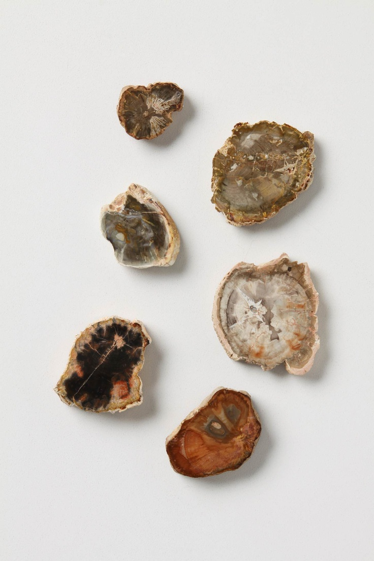 Petrified Wood Magnets: House Ware, Decor, Crystals, Magnets Anthropologie, Wood Magnets That, Petrified Wood, Deserts House, Anthropologie Com, Products