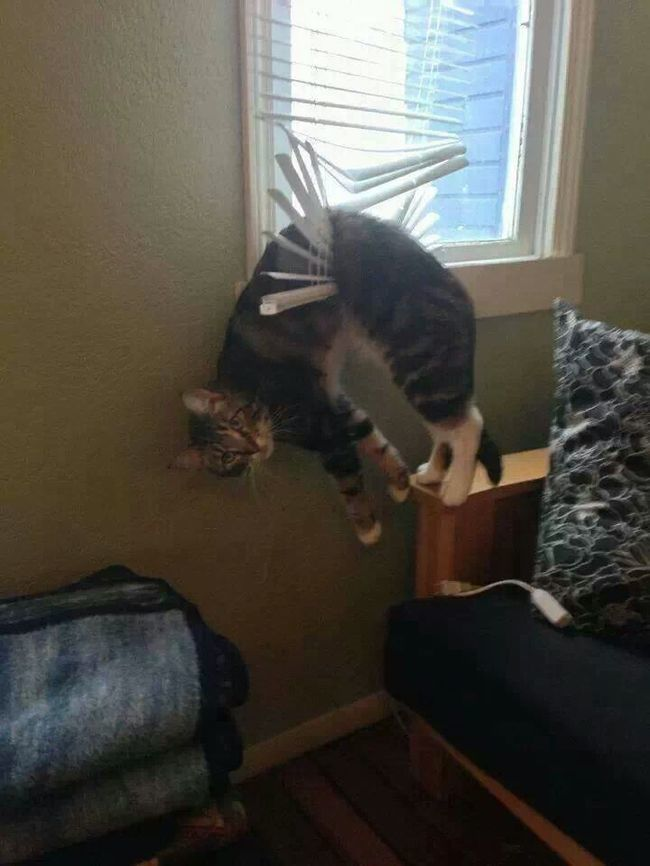 Hanging Cat  18 Hilarious Trapped Cats Who Need Human Help Right Now • Page 2 of 5 • BoredBug
