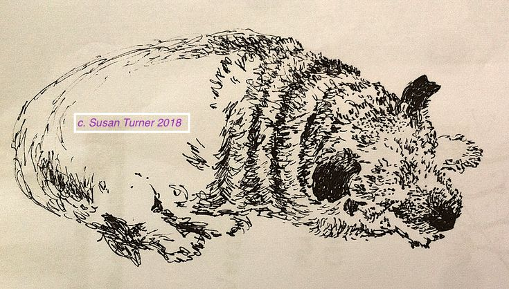 Pen sketch begun of Benson of Shropshire for The Year of the Dog