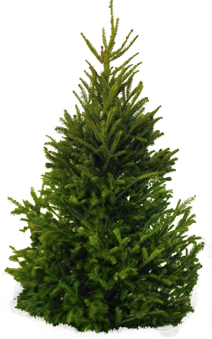 Download Png Image Tree Png Image Plant Texture Plants Trees To Plant