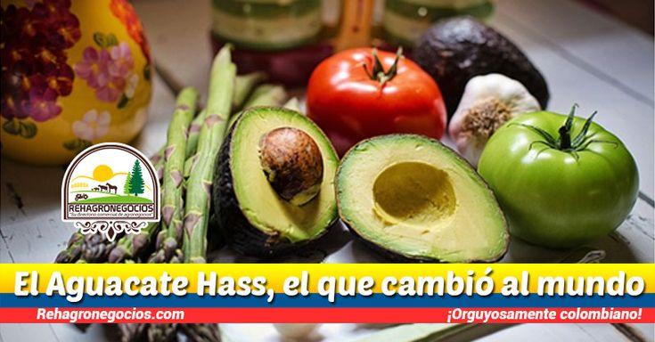 El aguacate hass, el que cambió al mundo Conoces el aguacate hass, seguro has escuchado hablar de él si eres colombiano. Así como con el café, Colombia se ha abierto a mostrar más de sí misma, revelando sus mejores productos agrícolas, así de esta forma exponer que el país no solo es bueno en el ...  https://goo.gl/1f6pT3   Si quieres pertenecer a nuestra base de datos regístrate gratis. 👉 http://eepurl.com/cLM9pf 👈  Suscríbete para recibir nuestros corr