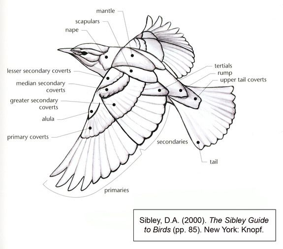 46 best images about bird reference on pinterest
