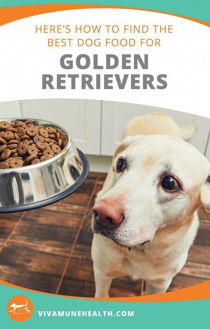 Likesisters Ittakestwo Doggram Wearehwoweare In 2020 Best Dog
