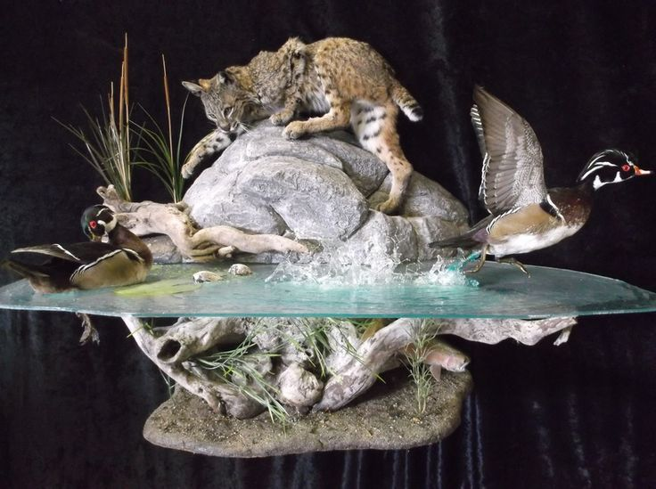 23 Best Coyote Mounts Images On Pinterest Taxidermy