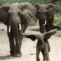 The Flying Elephant so cute  just look at Its face