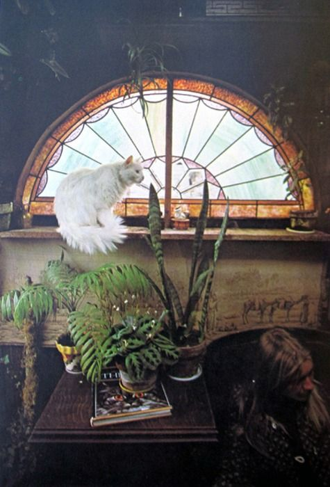 plants, stained glass arched window, lived in, vintage, opposite of modern
