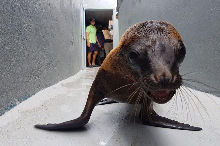 Algunas de las especies atendidas por el Parque Zoológico fueron liberadas o trasladadas a diferentes albergues, tal y como lo determinó la Profepa – Morelia, Michoacán, 04 de enero de ...