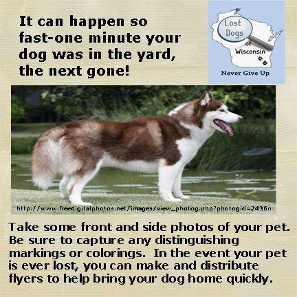 141 best Lost dog info and tips images on Pinterest Wisconsin - lost dog flyer examples