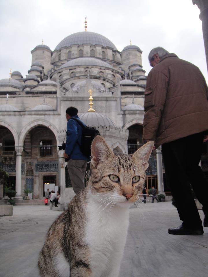 the guard cat of Eminonu Yeni Camisi