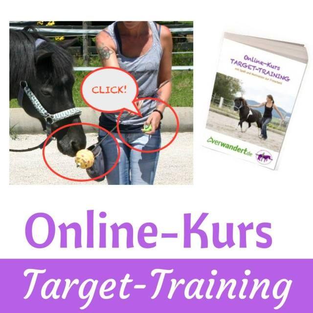 Wir haben den Online-Kurs Target-Training probegelesen! Warum Target-Training sinnvoll ist und warum der Online-Kurs von Tash-Horseexperience absolut empfehlenswert ist, erfährst Du auf dem Blog! #clicker #clickerpony #clickertraining #clickertrainingworks #targettraining #positiveverstärkung #leseempfehlung