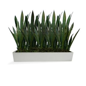 """A collection of 7"""" tabletop planters offered from select designer Jay Scotts. - Classic, clean shapes for versatility and ease in planting - Made from high-quality fiberglass for indoor or outdoor use"""