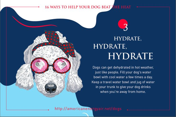 Bedlington Terrier - Tip 3 - Hydrate Hydrate Hydrate - Dogs can get dehydrated in hot weather, just like people. Fill your dog's water bowl with cool water a few times a day. Keep a travel water bowl and jug of water in your trunk to give your dog drinks when you're away from home.