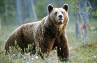 Vanlige dyr i Norge (fra boken Intro)
