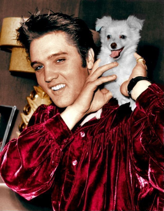 Elvis Presley and a shoulder DOG! Not as cool as a shoulder cat but still worth a pin.