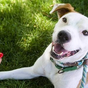 Dog behaviourist Liverpool - http://www.dog-ramblers.co.uk/dog-behaviourist-consultant/