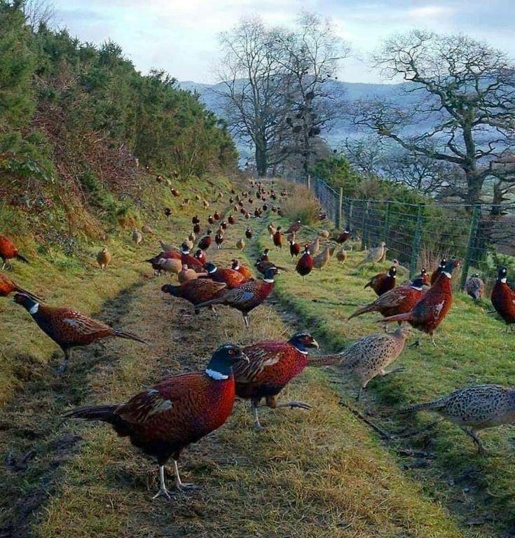 этого необходимо картинки птичий базар в деревне могут иметь как