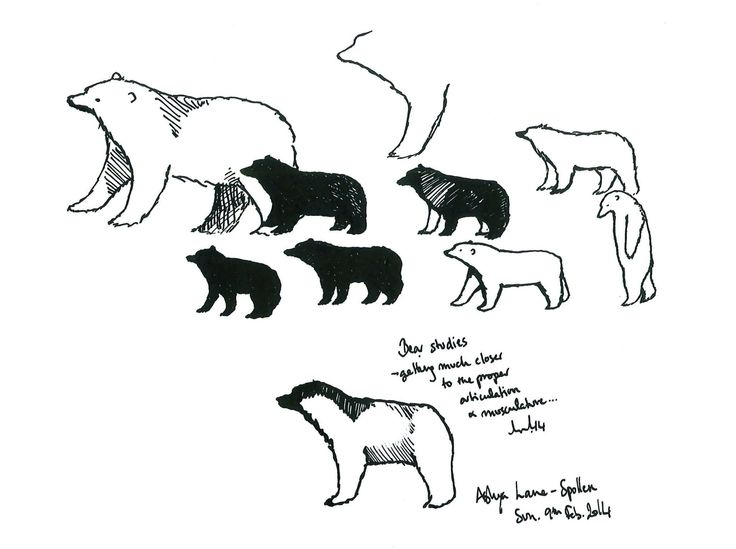 Learning Bears Quill and ink by Ashya Lane-Spollen