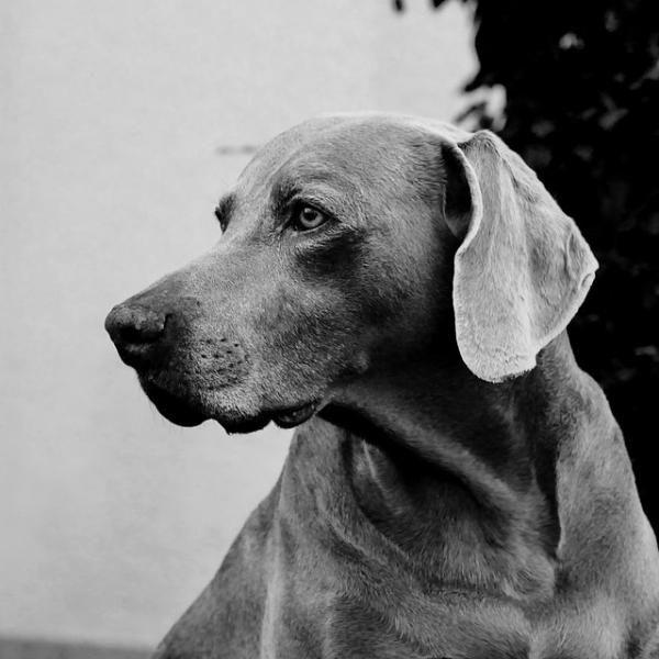 Tumores de piel en perros - ExpertoAnimal