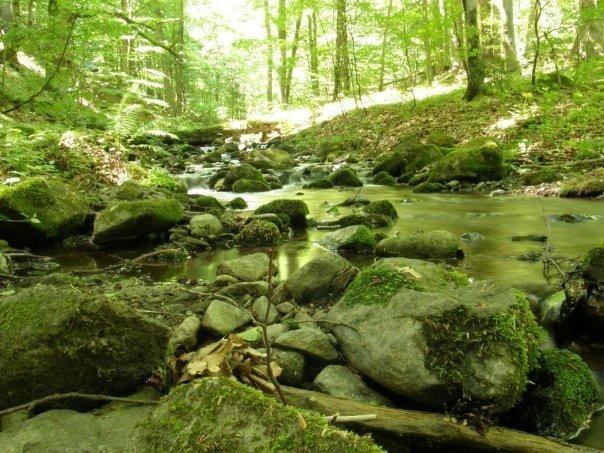 Badínský prales - Vyletik.eu #priroda #nature #slovensko #slovakia #cestovanie #travel