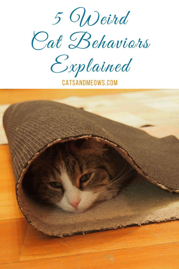 While we might love them to bits, there's no denying the fact that your cats behavior can be kind of... weird.