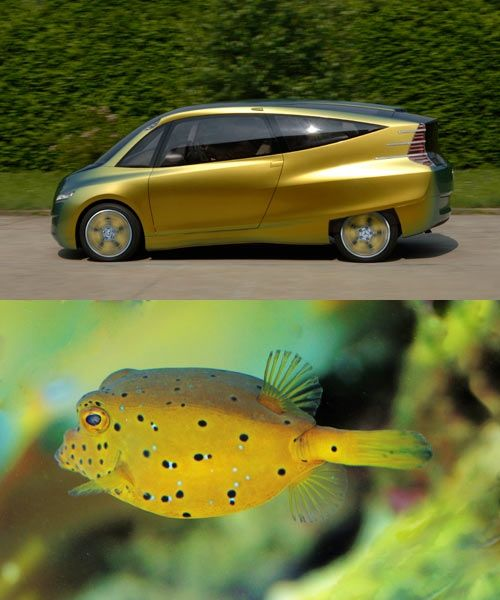 Mercedes-Benz looked towards the boxfish for their bionic car concept. Noting the aerodynamics and efficiency of the boxfish's shape, the engineers decided to apply the characteristics of the fish to a car. The result is a very streamlined vehicle with a 65% lower drag coefficient than other compact cars out at the time (2005).