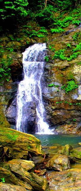 Tamaraw Falls gets its name from the word tamaraw, a water buffalo endemic to the island of Mindoro.