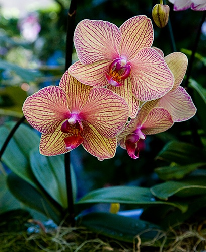 .: 12 Flower, Gardens Ideas, Orchids Care, Floral Beautiful, Golden Treasure, So Pretty, Treasure Orchids, Pink Orchids, Beautiful Things