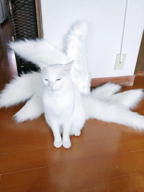レイヤーさんのコスチュームの前で飼い猫さんがポージング→なんか九尾の猫神様が降臨した! - Togetterまとめ