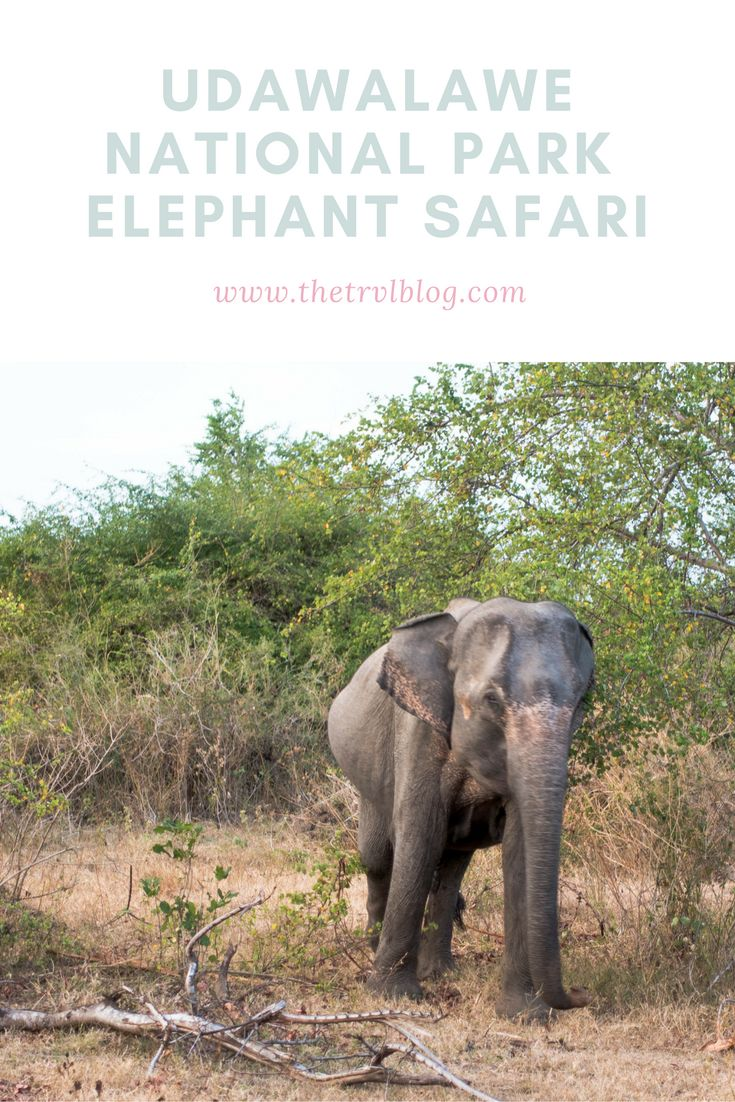 Udawalawe National Park, Sri Lanka.  We went on an elephant safari here in the hope of spotting elephant after elephant.  That's exactly that we did.  Click the link to find out how you can do exactly the same...