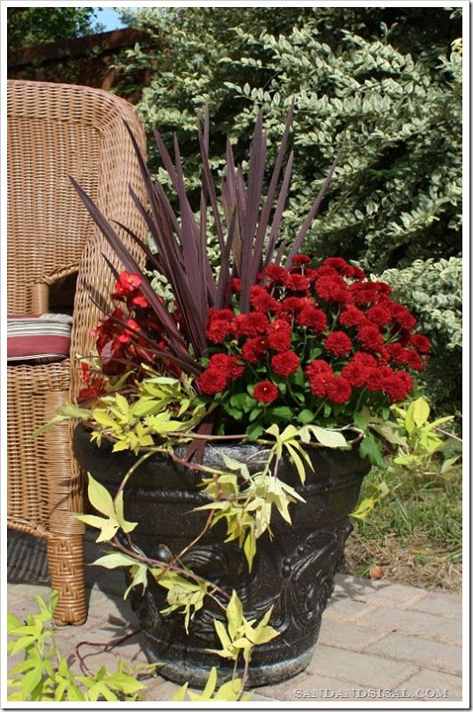 Fall planter will last until a hard frost & then replace the potato vine & begonia w/pansies.