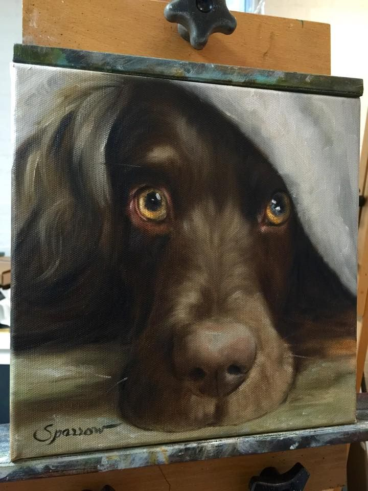 Portrait of a Boykin Spaniel in progress. For a painting of your dog contact Mary at www.marysparrow.com or www.facebook.com/hangingthemoon
