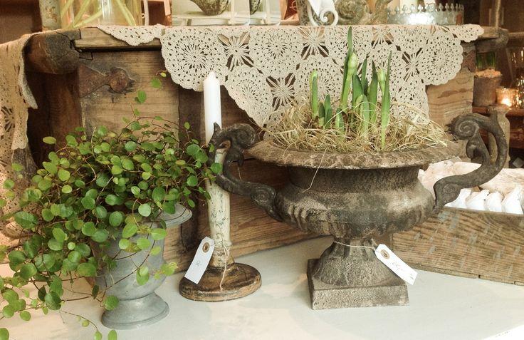 Rustic iron pot & spring bulbs <3